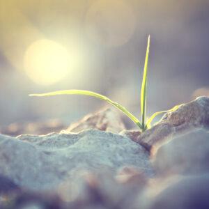 plante i vækst